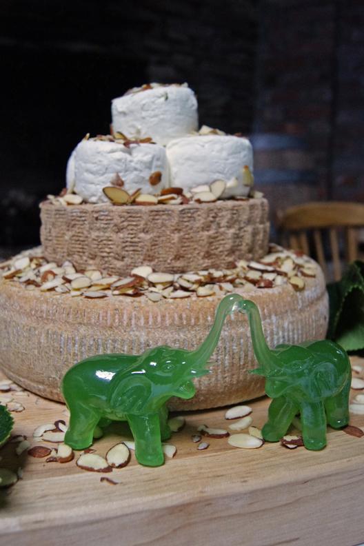cheese eleph.web